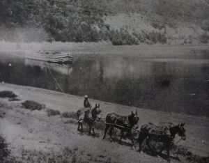 Canal Boat being pulled by a mule team. Courtesy of the Historical Society of Berks County.
